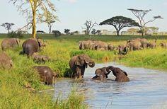 Tanzani; geweldige safari. Doen we zeker nog eens!