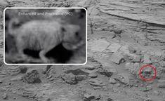 MARTE - Foto divulgada pela NASA de uma Criatura, Seria um Urso Polar ou Cachorro?