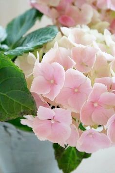 Lovely pink hydrangeas: added to garden this year 2014
