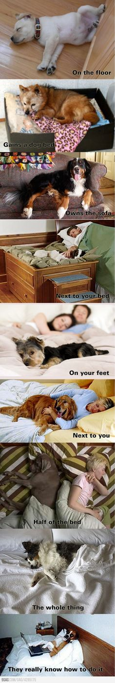 Evolution of pet sleeping