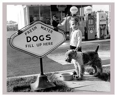 Dogs Fill Up Here
