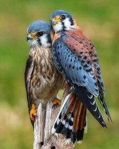 Fantastic Cost-Free beautiful birds of prey Style As a birds involving prey wedding photographer, the main issue a lot of make a complaint about will be the un All Birds, Birds Of Prey, Love Birds, Angry Birds, Pretty Birds, Beautiful Birds, Animals Beautiful, Beautiful Couple, Beautiful Butterflies