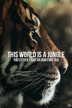 The world is a jungle - you either fight or run forever