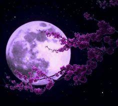 Violet moon xx