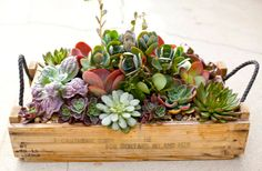Simply Succulent for Mother's Day #gift