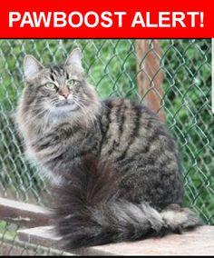 Please spread the word! Nick was last seen in Knoxville, TN 37914.    Nearest Address: Near Cracker Barrel Ln & Strawberry Plains Pike