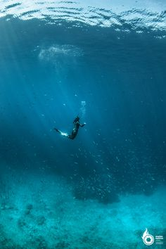 FREEDIVING - FREEDIVING AT VIS