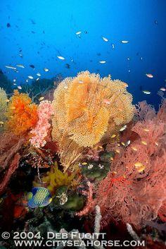 Coral Scene, Raja Ampat Indonesia
