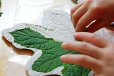 Leaf Casting with Plaster of Paris 25