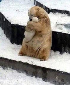 "29.8 mil Me gusta, 234 comentarios - WildLife-Animals (@wildlives) en Instagram: ""I love you baby ❤️ #wildlives @wildlives"""