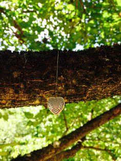 Maruca's tree.