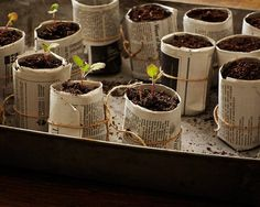 Gardening 101: How to Sprout a Seed - Yahoo Homes