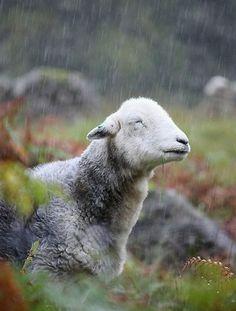 Beautiful Moments in Rain