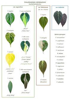 Save the Plants! Rare Plants, Exotic Plants, Tropical Plants, Indoor Shade Plants, Pothos Plant, Decoration Plante, Plant Guide, House Plant Care, Plant Identification
