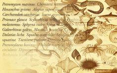 ICTIOTERM, Base de datos terminológicos y de identificación de especies pesqueras de las costas de Andalucía