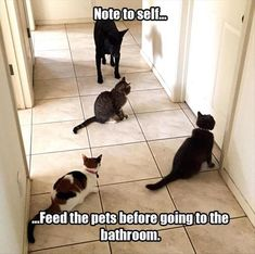 Funny Animal Pictures Of The Day - 34 Pics