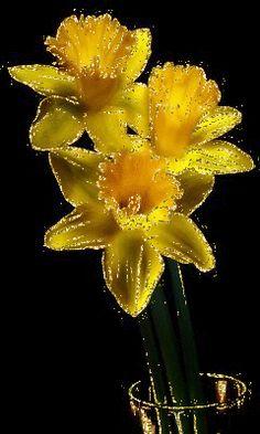 Нарциссы Flowers Gif, Bouquet, Black Women Art, Gifs, Female Art, Beautiful Flowers, Cool Pictures, Dandelion, Butterfly