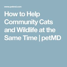 How to Help Community Cats and Wildlife at the Same Time | petMD