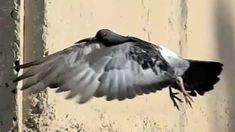 Ultra Slow Motion Bird