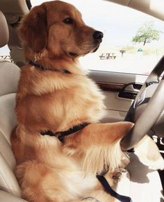 Hop in....we're going to the park!
