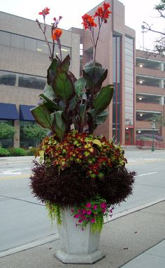 cannas, coleus, and red alternanthera