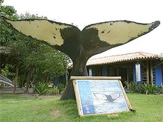 Projeto Baleia Jubarte, Praia do Forte, Bahia, Brasil.