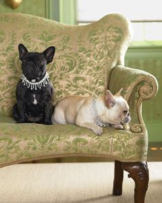 call me crazy... but this...   something about french bulldogs sitting on a green french sofa that makes me want them.