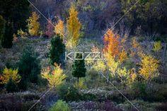 autumn trees. - View of autumn trees.