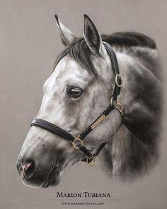 © 2014 All Rights Reserved - Marion Tubiana Horse Drawings, Animal Drawings, Art Drawings, Painted Horses, Pretty Horses, Beautiful Horses, Arte Equina, Art Pastel, Horse Artwork