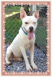 FROSTY is an adoptable Pit Bull Terrier Dog in Marietta, GA. This cute boy is Frosty and he is both cute as can be and oh so sweet. He has one blue eye and one brown eye. Frosty knows sit, stay and la...