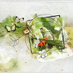 Hummingbird4