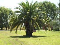 """""""...palmeras no son árboles..."""" José Saramago en """"El año de la muerte de Ricardo Reis"""""""