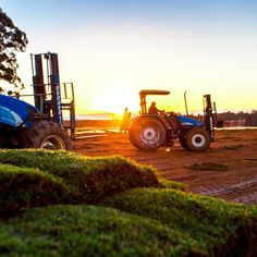 Our tractors waiting to collect freshly harvested Legend turf at #sunrise. #instamood #twinviewturf #turffarm #turf #grass #lawn #loveyourlawn #nature #naturelovers #natureaddict #farm #photography #instapic #instadaily #instagood #good #morning #goodmorning #tractor #sunrays