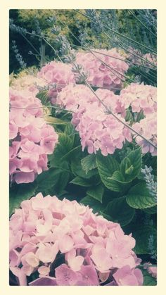blühende Sommergärten Cabbage, Vegetables, Plants, Summer Garden, Cabbages, Vegetable Recipes, Plant, Brussels Sprouts, Veggies