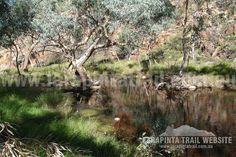 Nice fresh waterholes can be found along Section 2, Larapinta Trail. © Explorers Australia Pty Ltd 2013