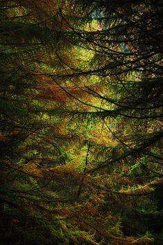 Wales - Autumn. I NEEEEEED TO GO TO WALES!