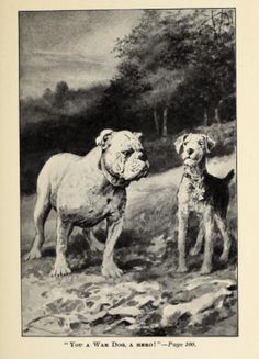 """Gentleman from France, An Airedale Hero / Clarence Hawkes / Illustrated by L. J. Bridgman c. 1924 / You A War Dog, A Hero!"""""""