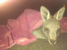 This little one didnt make it, found on side of road, maitland area. :-(