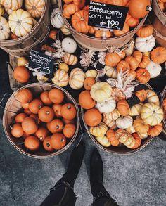 A bunch of pumpkins! #seasons #fall #outono #autumn #fallseason #leaves #coloursofautumn @nicholeciotti