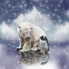 penguin and polar bear friends - Google Search