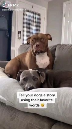 Funny Animal Jokes, Funny Dog Memes, Funny Dog Videos, Funny Vid, Funny Animal Pictures, Pitbull Pictures, Dog Humor, Hilarious, Cute Funny Dogs