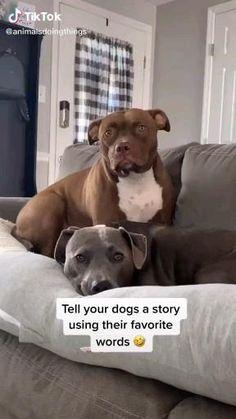 Funny Animal Jokes, Funny Dog Memes, Funny Dog Videos, Funny Animal Pictures, Cute Funny Dogs, Cute Funny Animals, Cute Stories, Cute Animal Videos, Cute Little Animals