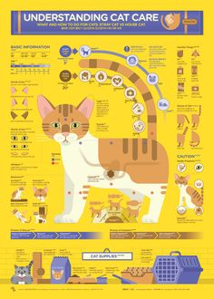 1806 Understanding Cat Care Infographic Poster on Behance - Infographics - Infographic Examples, Chart Infographic, Infographic Templates, Art Resume, Illustrator, Blond Amsterdam, Information Graphics, Poster On, Poster Ideas