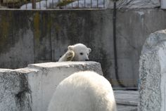 Maruyama-zoo Sapporo, JP