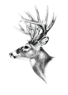 Posters och affischer med djur | tavla med nordiska djur
