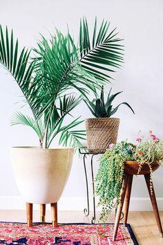 #huisdecoratie moet toffe #planten in de #woonkamer | MiniMe.nl