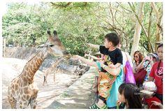 跟著泰國導遊一家人過新年,帶你走在地人去的零距離動物園,這可是親子旅遊必去景點,東南亞最大的野生動物園喔! 曼谷自由行-在地人推薦動物園【Khao Kheow綠山動物園】