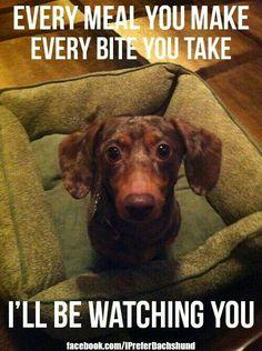 #funnydogshirts