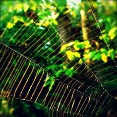 spider web photo print on etsy