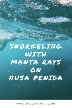 Snorkeling With Manta Rays On Nusa Penida Manta Ray, Snorkeling, Bali, Posts, Diving, Messages, Scuba Diving